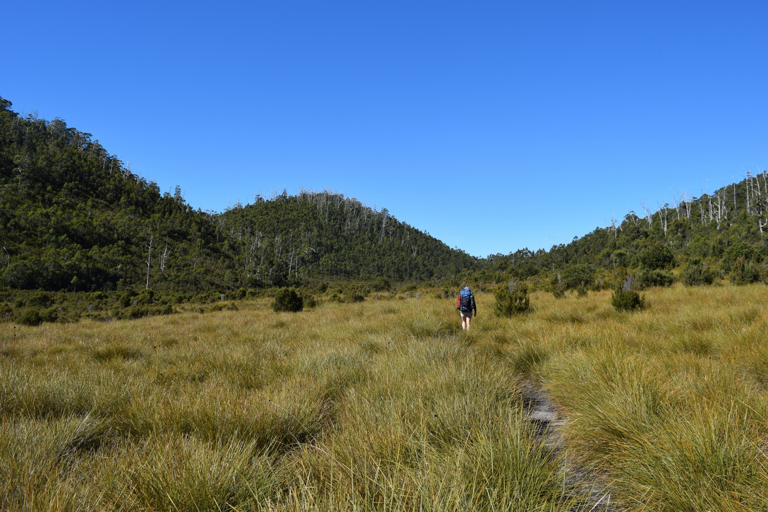 Buttongrass Plains - Frenchman's Cap - Sean Whitehill